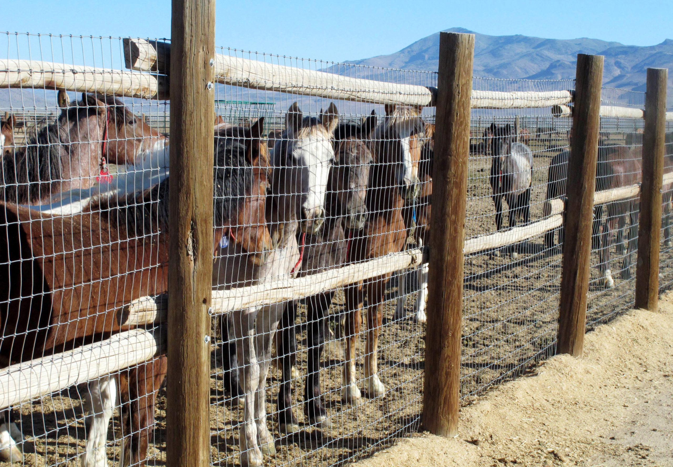 Congress Wants To Pull The Reins On Accelerated Wild Horse Roundup Plan