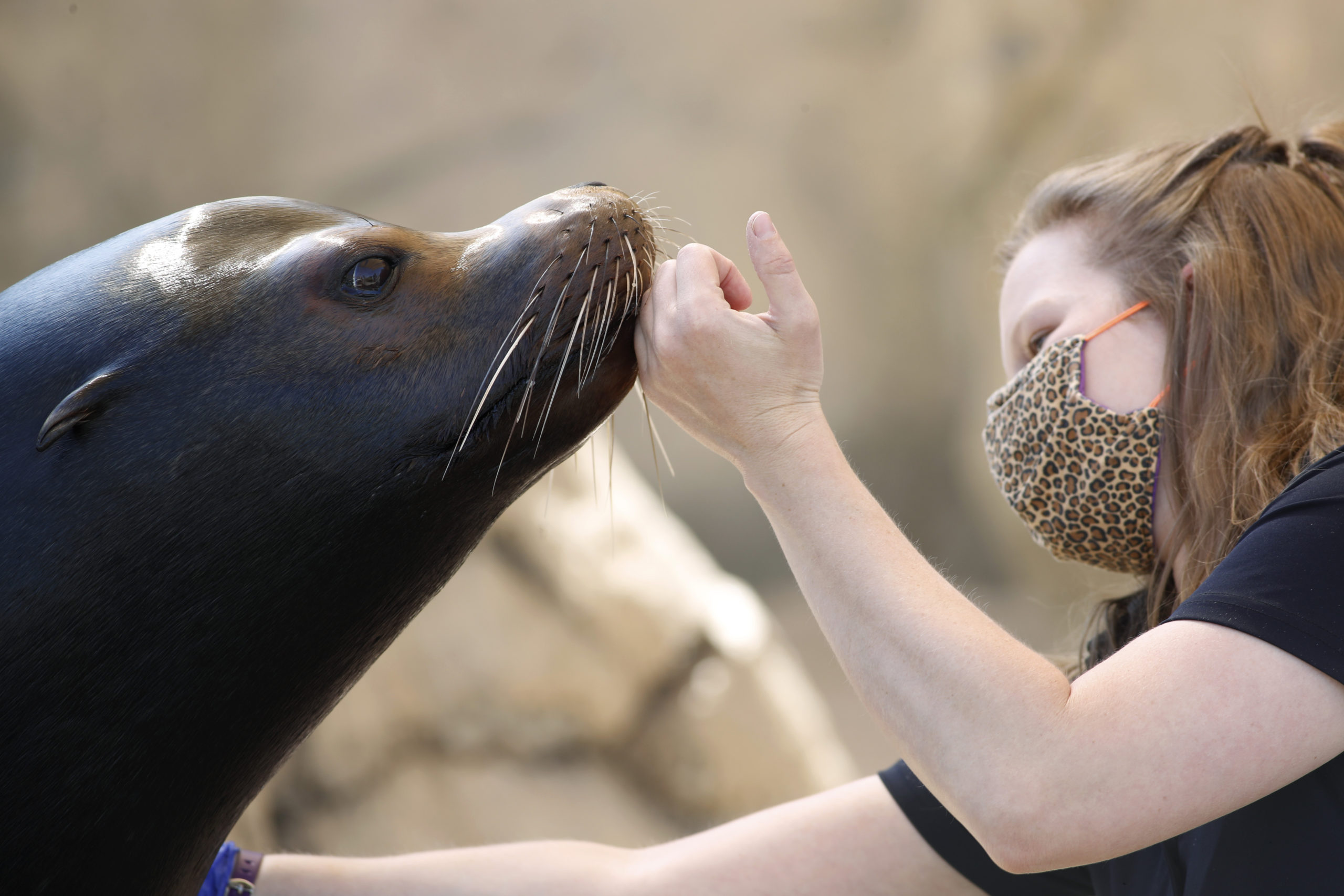 denver zoo, nick the sea lion, brandi taylor, r m