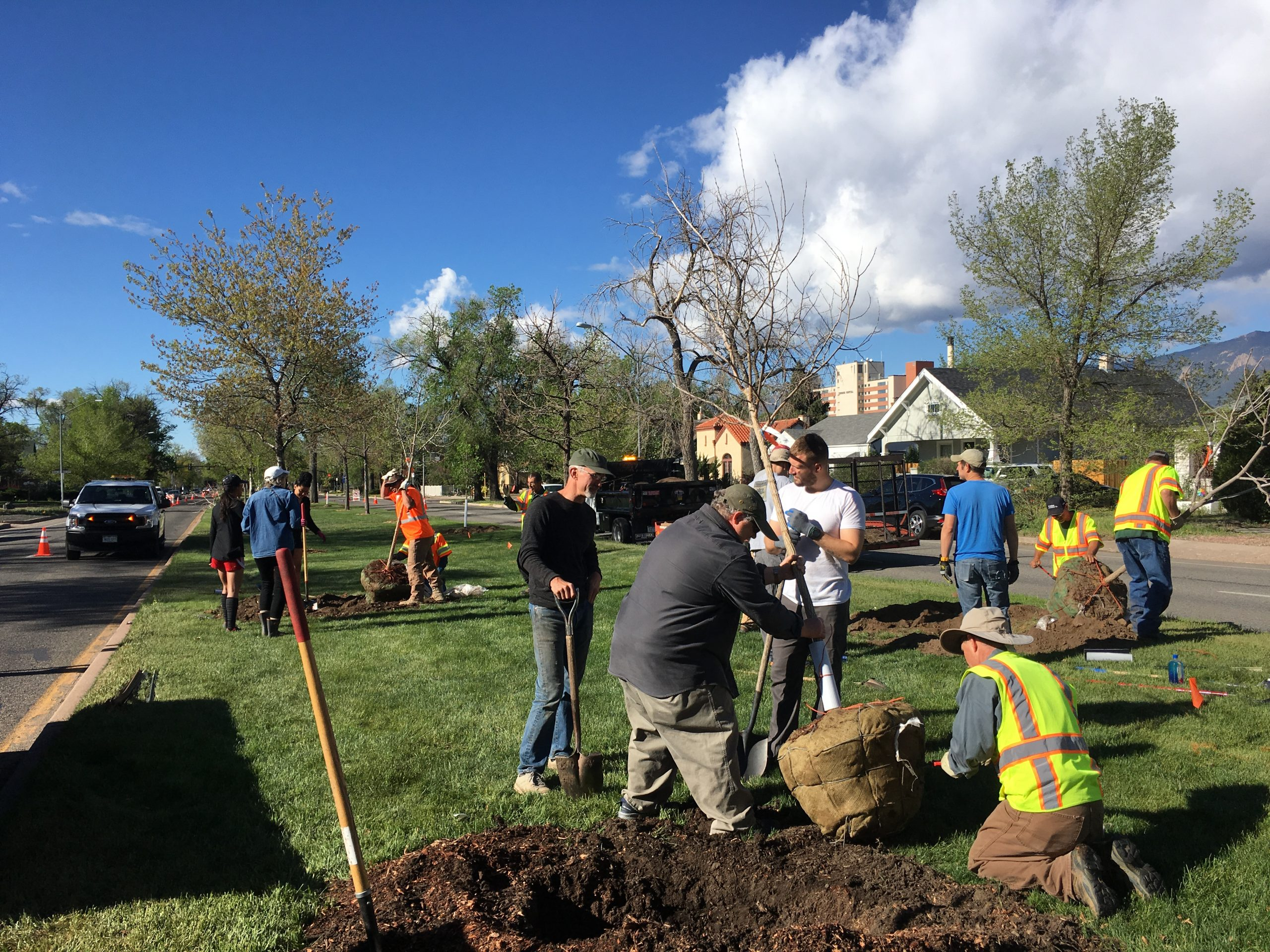 Volunteers and city staff plant trees during the 2019 Median Planting event.