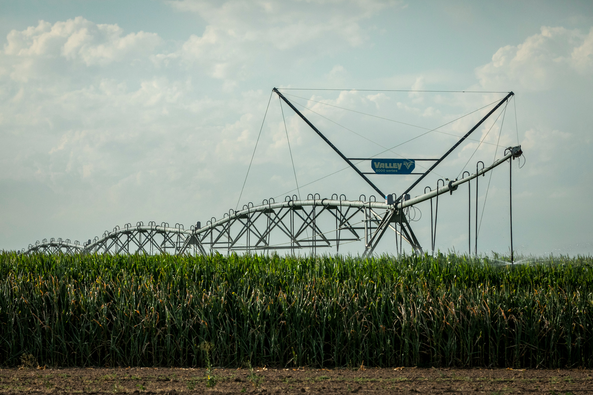 Irrigation Farming Corn Weld County