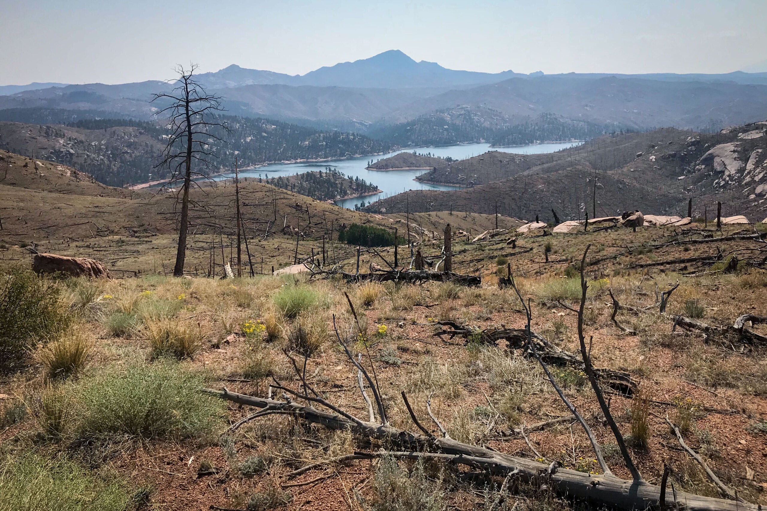 A high-severity burn area of the 2002 Hayman fire northwest of Colorado Springs, near Cheesman Lake, Aug. 26, 2020.