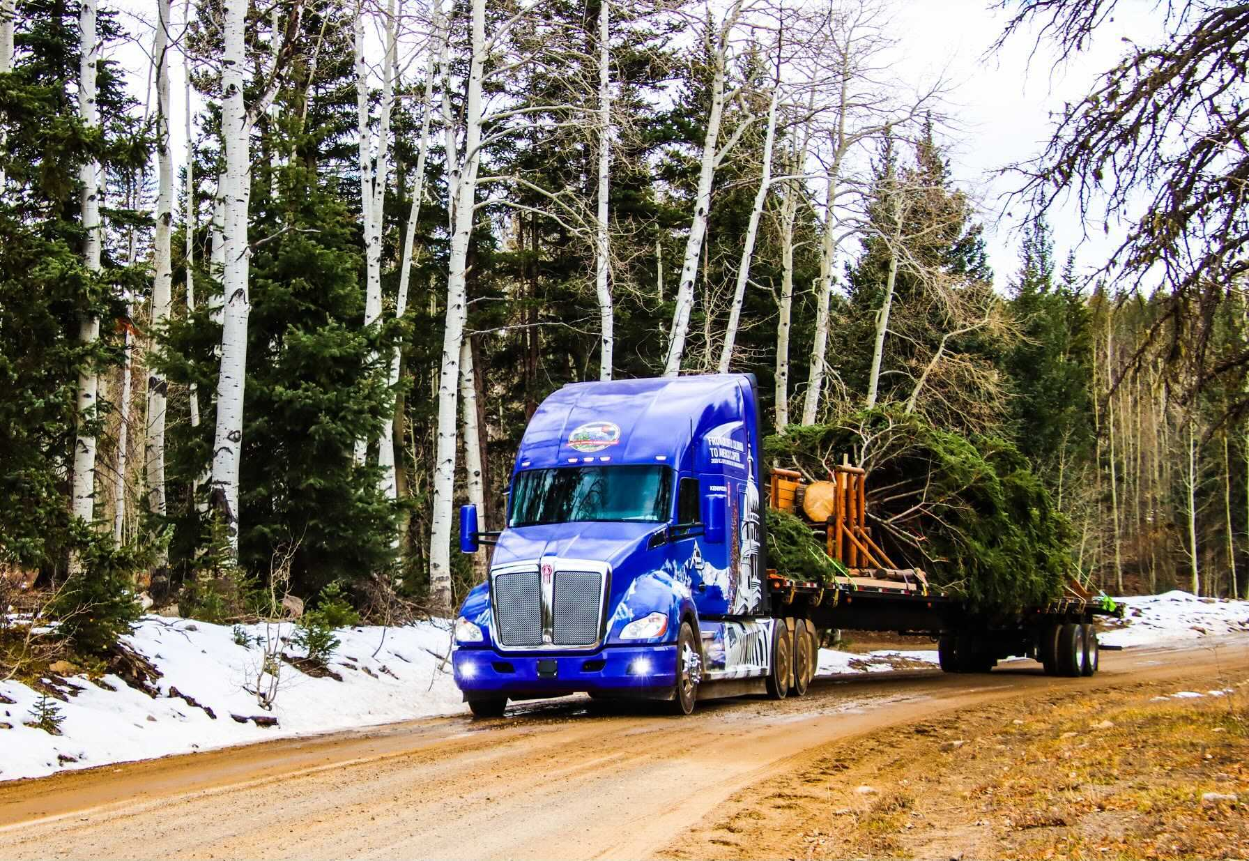 The 2020 US Capitol Christmas Tree Came From Colorado. Before It