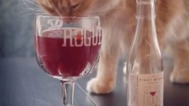 Courtesy of Apollo Peak, maker of all-natural wine for cats.