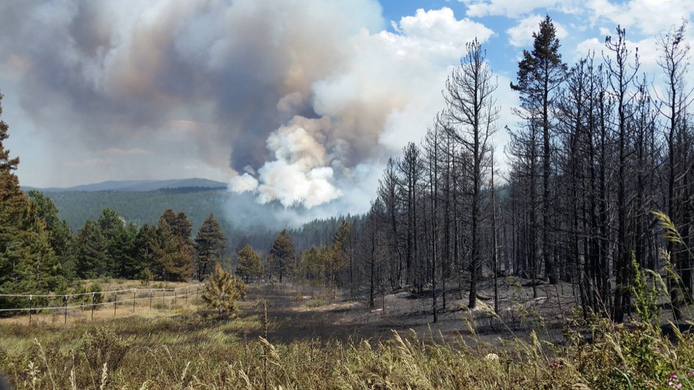 The Cold Springs Fire billows behind a stand of burnt trees. (Chief Jeff Berino / Lake Dillon Fire-Rescue)