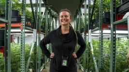 Verde Natural master grower Cassandra Maffey poses in the company's grow facility. (Kevin J. Beaty/Denverite)  marijuana; pot; weed; verde natural; tommy chong; grow; agriculture; kevinjbeaty; denver; denverite; colorado;