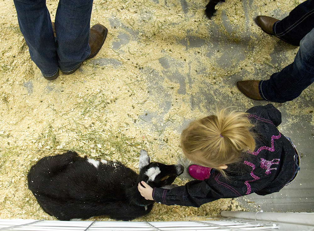 Two-year-old Gabriella DeLeo pets a tiny goat at the National Western Stock Show. Jan. 8, 2016. (Kevin J. Beaty/Denverite)  national western stock show; nwss; national western center; cowboy; kevinjbeaty; denver; denverite; colorado;