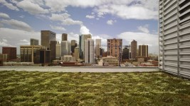 Green roof of the EPA building in Denver. (Courtesy Denver Green Roof Initiative)
