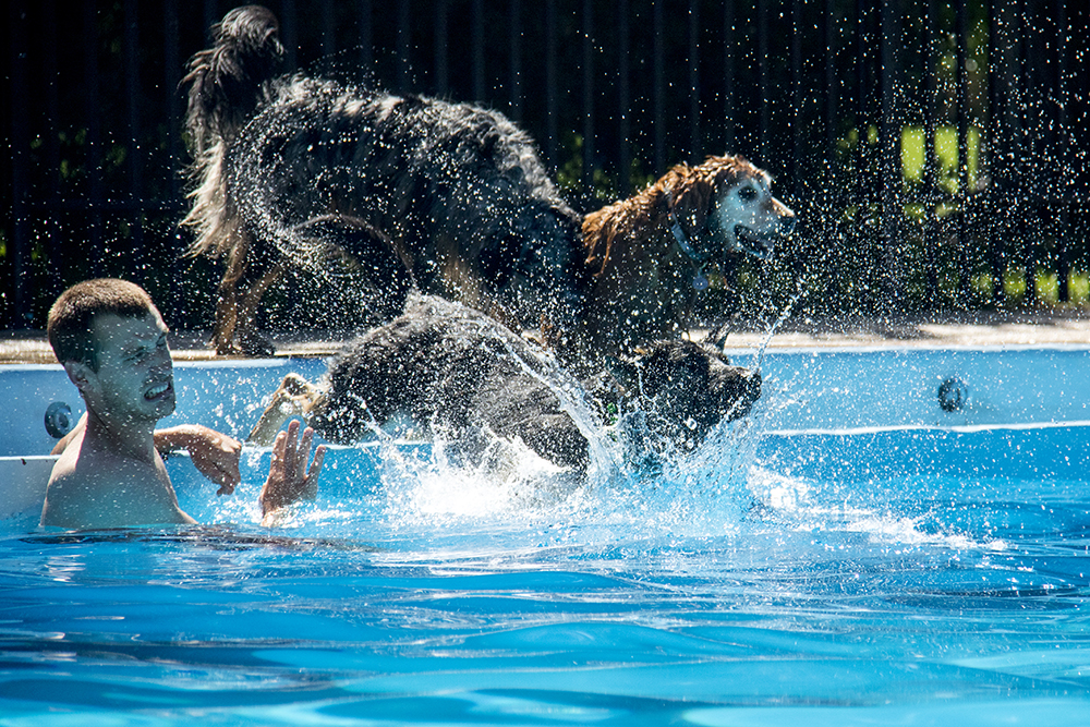 Nate Johnson faces the side effects of dogs in a pool. Dog-a-Pool-ooza at Cook Park Pool, Aug. 13, 2017. (Kevin J. Beaty/Denverite)  public pool; dogs; pets; Dog-a-Pool-ooza; cook park; denverite; colorado; kevinjbeaty; denver;