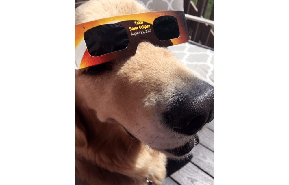 Oscar is ready for the eclipse. (Submitted by reader Matt Smith)