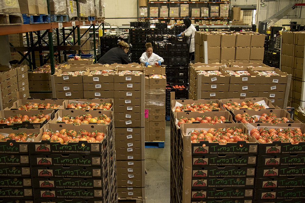 Stacks of vegetables at Suntastic, a grower that distributes to grocery stores, Dec. 18, 2017 (Kevin J. Beaty/Denverite)  denver; colorado; denverite; food insecurity; food; sustainability;