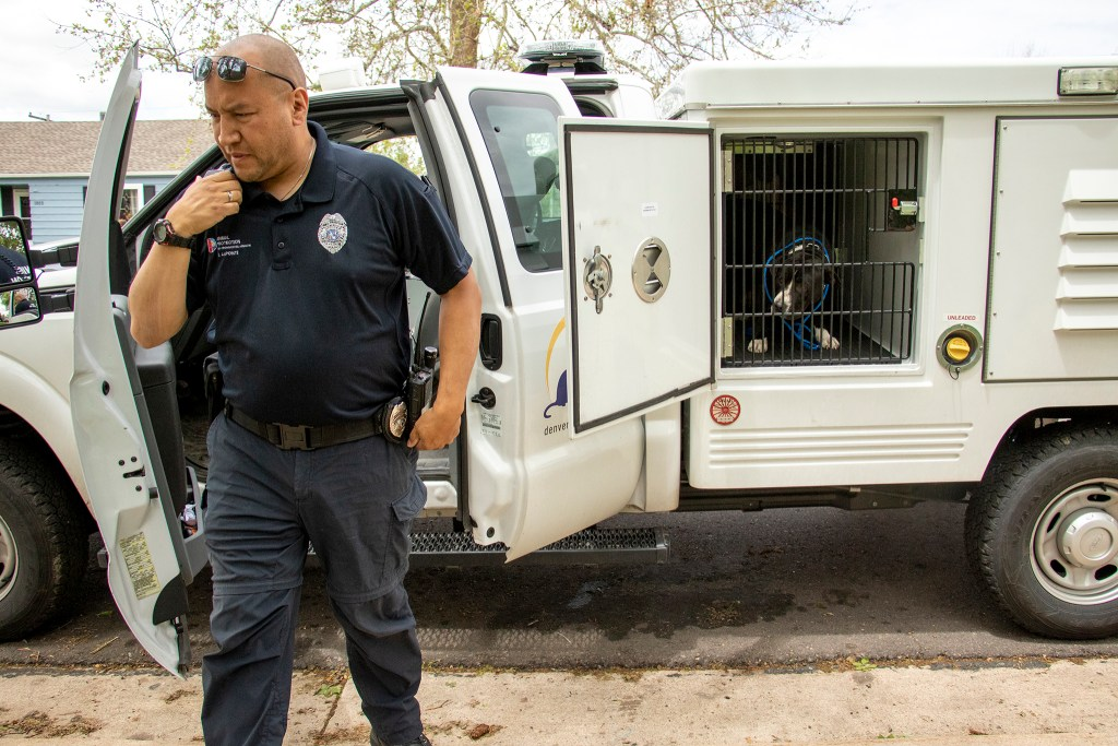 Denver Animal Rescue officer Jay LaPointe reports a stray dog he picked up in southwest Denver, March 29, 2019. (Kevin J. Beaty/Denverite)