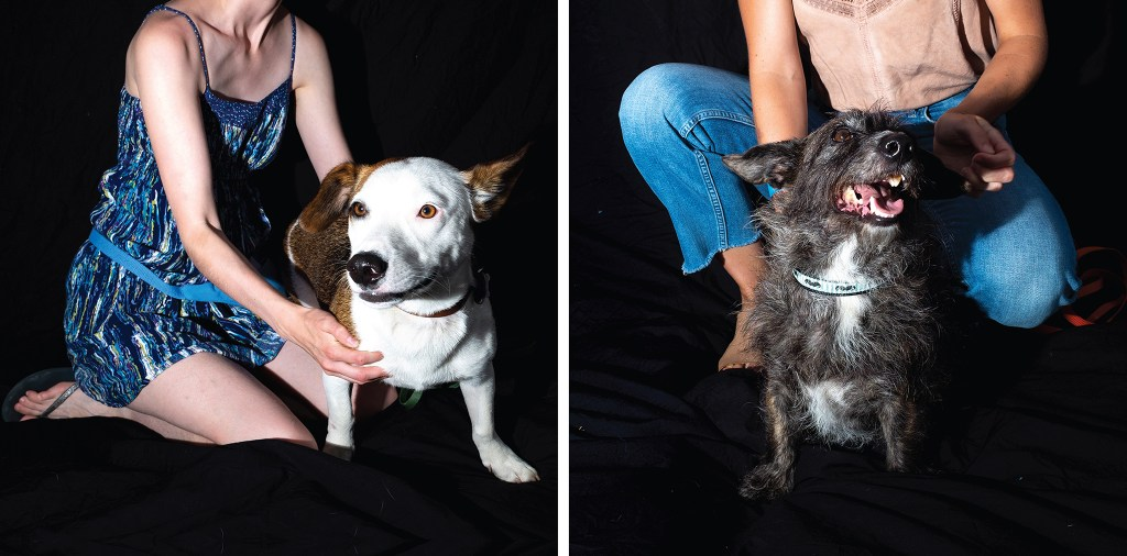 Ollie Ollie Oxen Free George Fay-Martin (left) and Leroy Brown pose for portraits with their humans at City Park Jazz, July 14, 2019. (Kevin J. Beaty/Denverite)