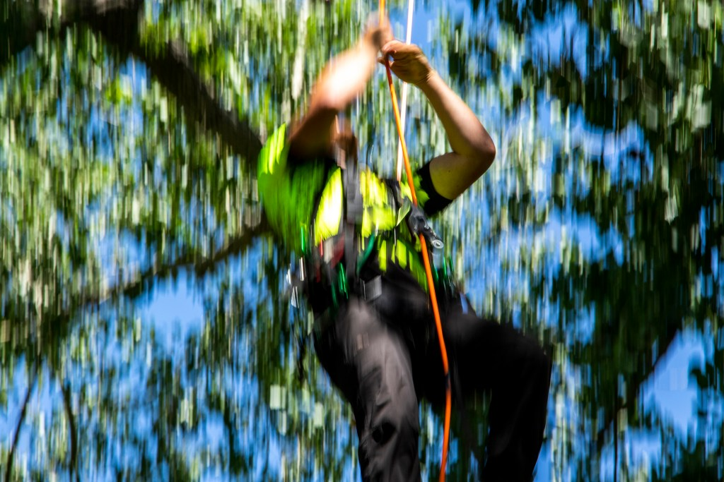 Ethan King, an arborist from Lubbock, TX, flies up a tree in Cresmoor park during the annual regional tree-climbing competition put on by the International Society of Arboriculture's rocky mountain chapter, July 20, 2019. (Kevin J. Beaty/Denverite)