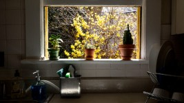 Plants on a windowsill at Eric Robert Dallimore's Congress Park home, March 25, 2020. (Kevin J. Beaty/Denverite)