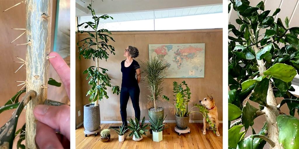Christine Richards and her mystery cactus. (Courtesy: Christine Richards)