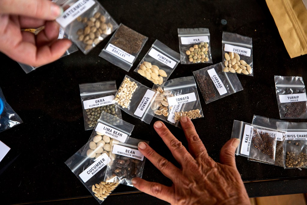 Seeds for planting during a gardening class at the Beloved Community Tiny Home Village in Globeville. Aug. 29, 2020.