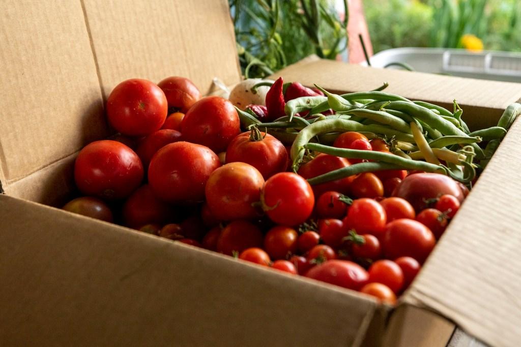 Harvest bounty just picked from the El Oasis community garden in Denver's Highland neighborhood. Sept. 25, 2020.