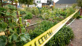 The El Oasis community garden could shrink from covering this whole lot to one third of its size, behind the line marked by caution tape. Sept. 25, 2020.