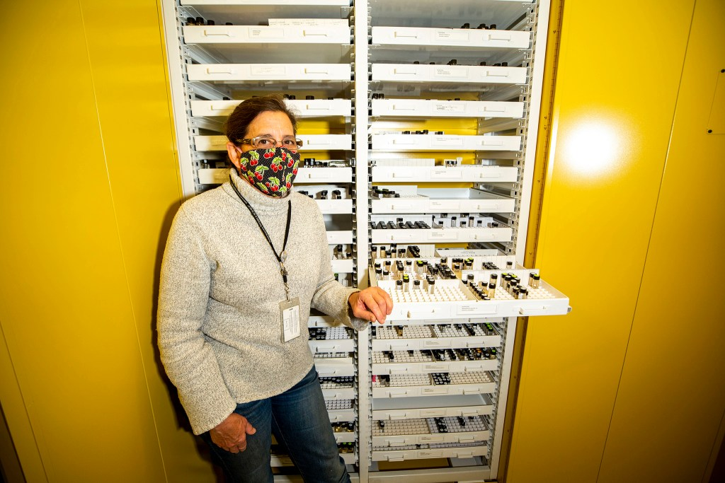 Paula Cushing, arachnid expert with the Denver Museum of Nature and Science, stands amid drawers filled with spiders in vials. Dec. 11, 2020.