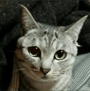 加工元のサンプル猫画像