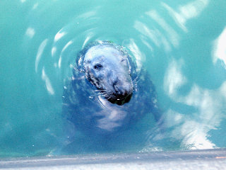 A big fat seal in Dublin