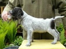 Puppy Winston2
