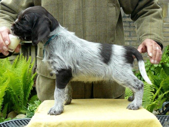 puppy Wietze2