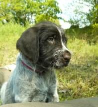 puppy wanka1