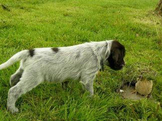 puppy warro2