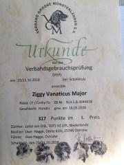 Ziggy VM VGP1
