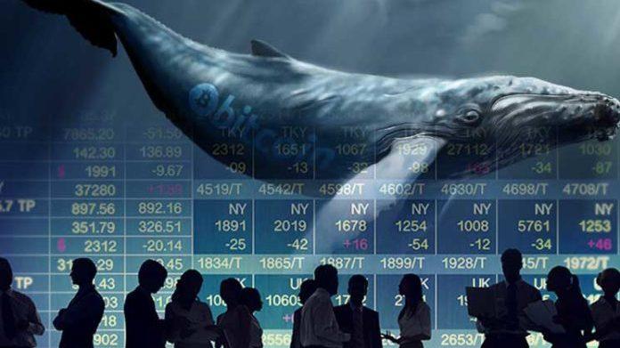 Whale Alert – Alertas de Ballenas Bitcoin en tiempo real