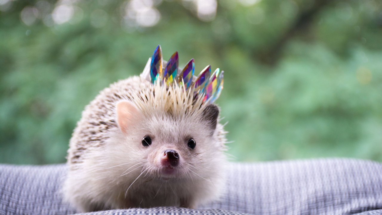 Blockchain startup Audius aims to make dapps easier to use with Hedgehog