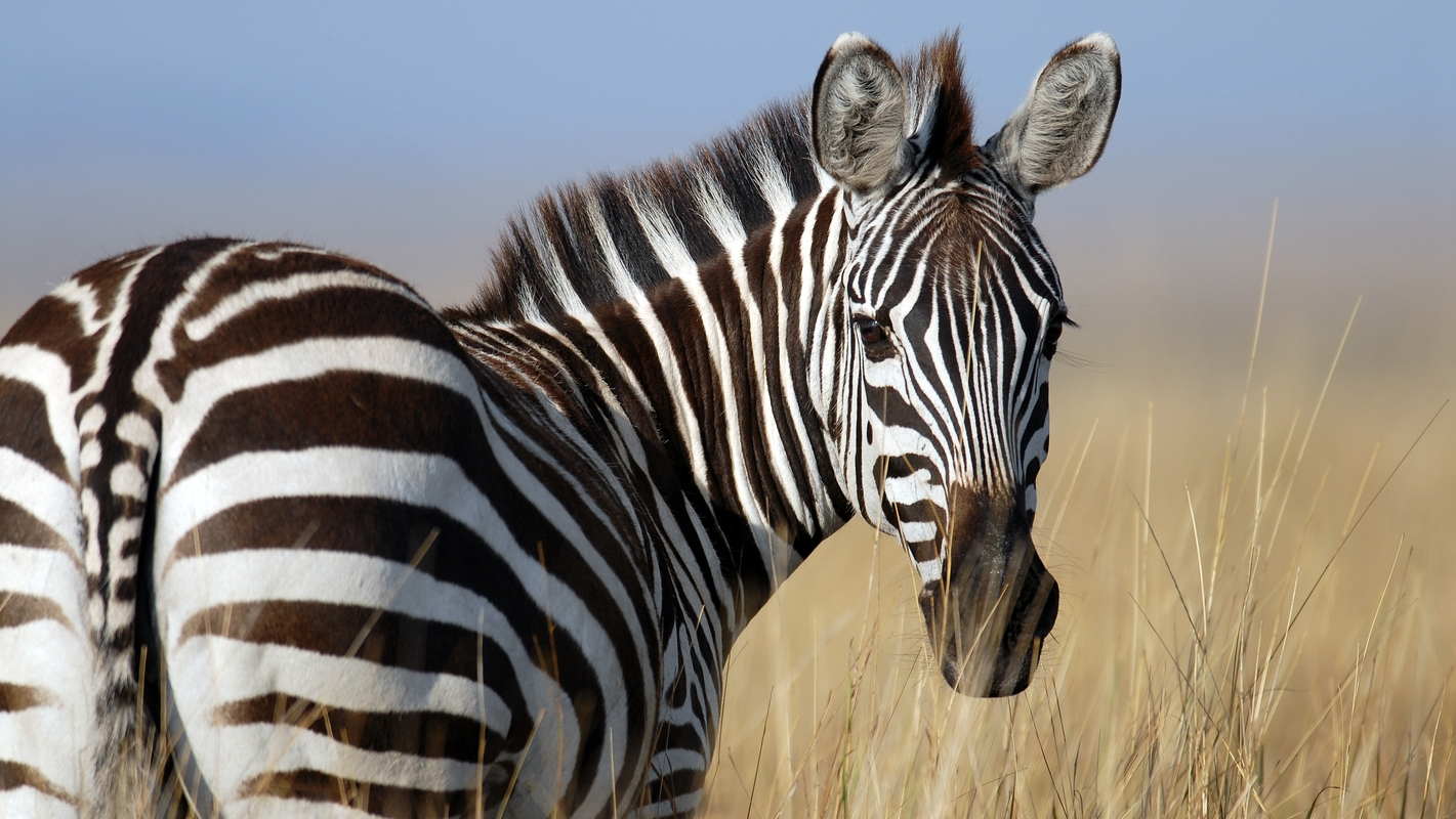 Parity builds Zebra to make it easy for developers to build on Zcash
