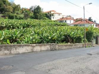 Madeira_14