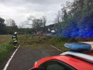 umgestürzter Baum bei Sponheim