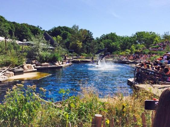 Bei der Hitze wären die meisten am liebsten mit in die Lagune gesprungen.