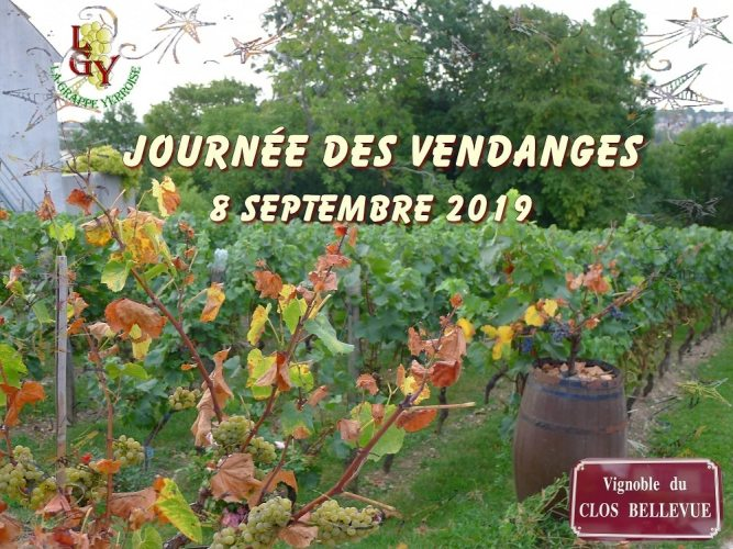 Vendanges 2019 au Clos Bellevue
