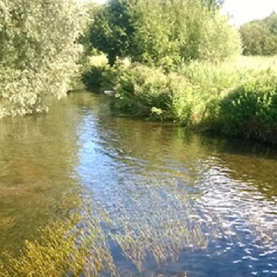 Modelling the influence of aquatic plants on rivers' flood conveyance capacity