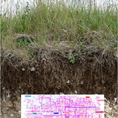Whole genome metagenomics to determine land use effects on soil ecosystem services 400 x 400 px