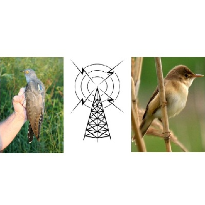 Effects of electromagnetic noise on the orientation of migratory birds