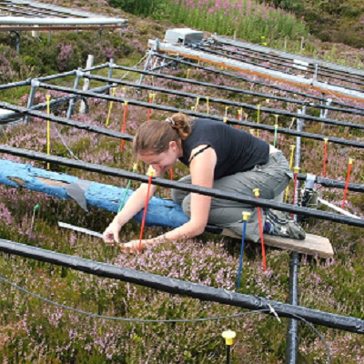 The role of moss mats on the resilience of soil to climate change