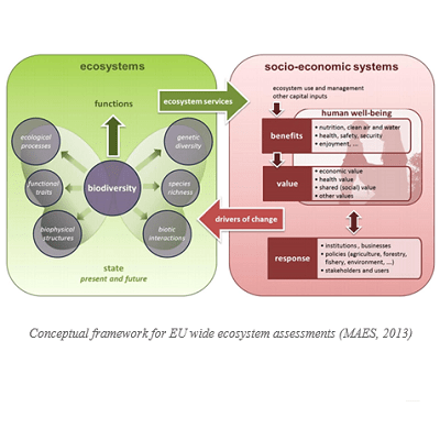 Species4Services – Which Species and Traits Best Indicate Ecosystem Services?
