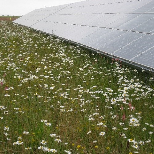 Integrated impacts of transformative land-use change and climate change on grassland biodiversity, ecosystem services and land carbon uptake