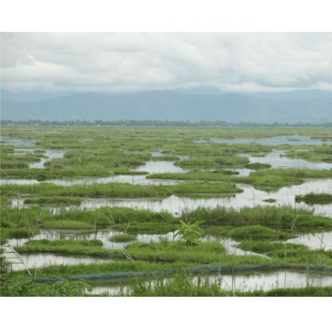 Loktak Lake, India: Assessing the impacts of aquaculture and pesticide use in a protected tropical wetland