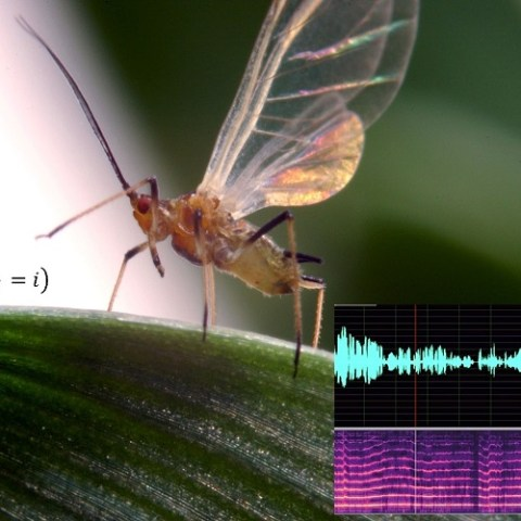 Understanding and monitoring insect pest dispersal within a changing environment