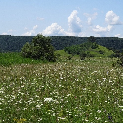 Assessing the role of geodiversity in conserving biodiversity in agricultural Eurasian grasslands