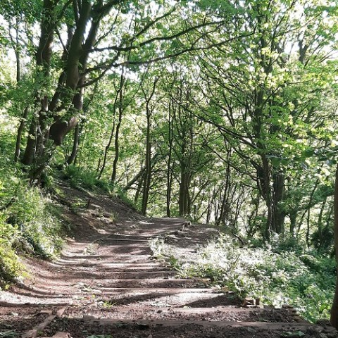 The War-torn Woodlands of Britain: Reconstructing the ecological impacts of historical disturbance