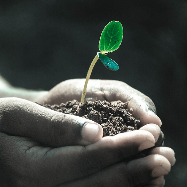 A seedling is cupped in some hands