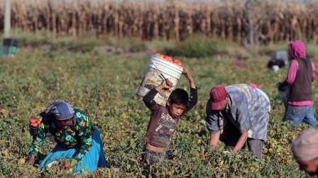 FAO: la mayor reducción en el trabajo infantil peligroso se dio en América Latina y el Caribe