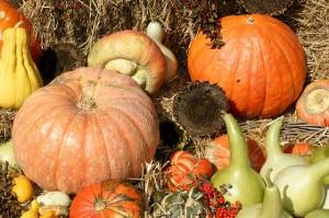 pumpkins-821805_640